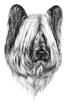 Skye Terrier Puppy Receipt Book